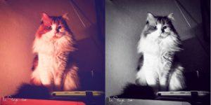 Convivere con un gatto